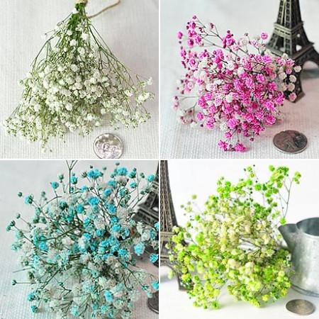 드라이플라워 - 프리저브드 안개꽃 12종