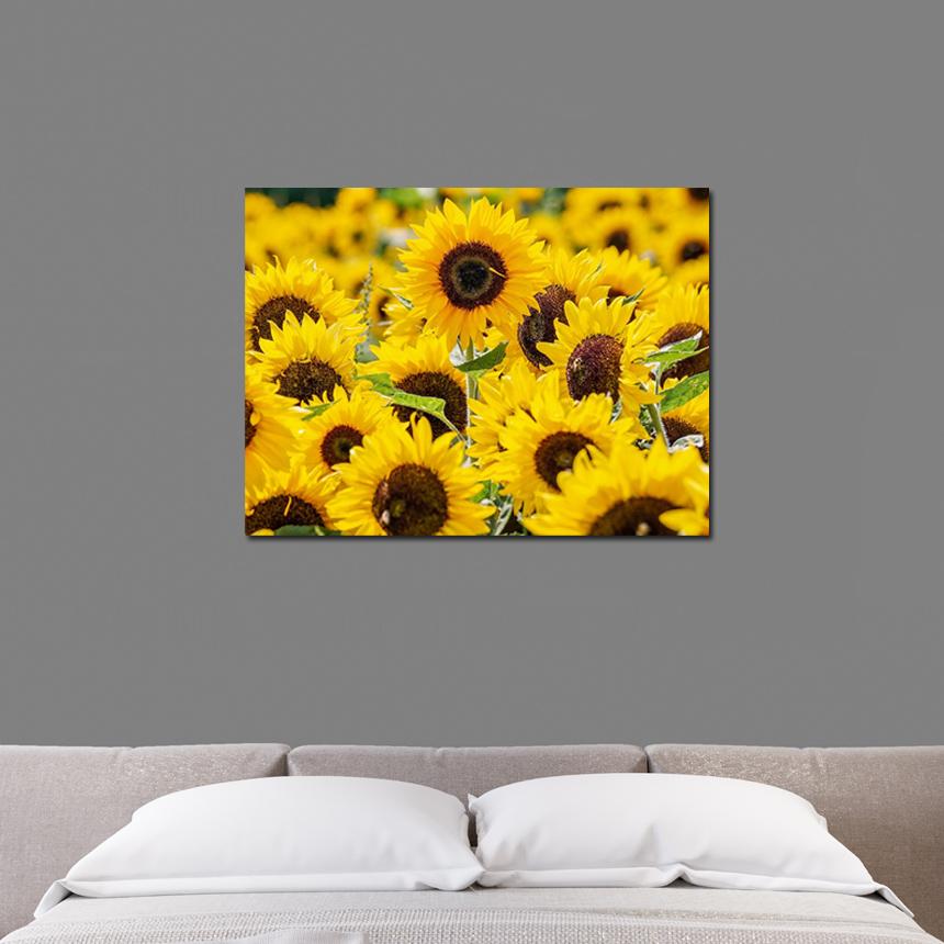 개업선물 매장 인테리어 해바라기 그림(50x60cm) - 아트빌리지, 54,900원, 홈갤러리, 캔버스아트