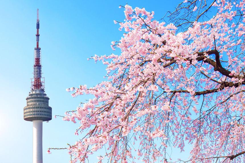 seoul-tower-pink-cherry-blossom-sakura-season-spring-seoul-south-korea.jpg