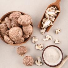 청풍농원 생표고버섯 (중품,상품) 1kg