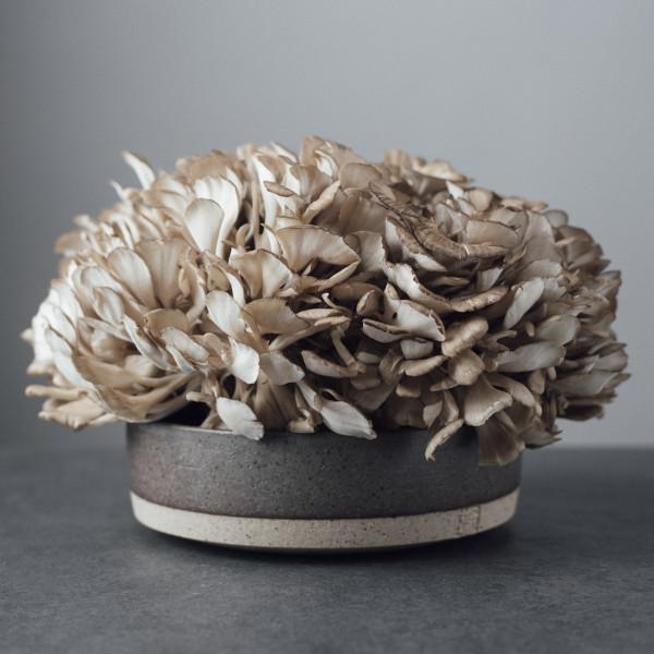 고맙다양양몰 - 농산물직거래쇼핑몰,바로세움버섯 홍삼과 잎새버섯으로 제조한 강력정(강원도의 힘) 4개월분 분량