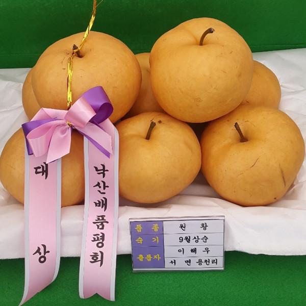 고맙다양양몰 - 농산물직거래쇼핑몰,양양 형준농원 낙산배 7.5kg