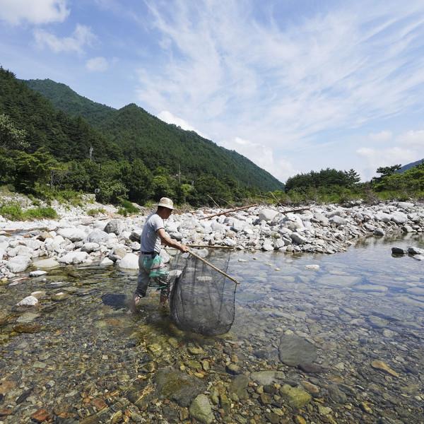 고맙다양양몰 - 농산물직거래쇼핑몰,강원도 양양 자연속 힐링체험 물고기잡이