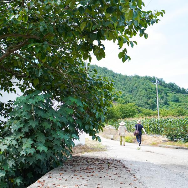 고맙다양양몰 - 농산물직거래쇼핑몰,양양 금풀의마을 마을 걷기 힐링 체험