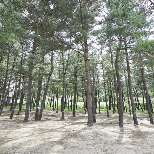 고맙다양양몰 - 농산물직거래쇼핑몰,강원도 청정지역 양양 38평화마을 옥수수체험 캠핑 야영지